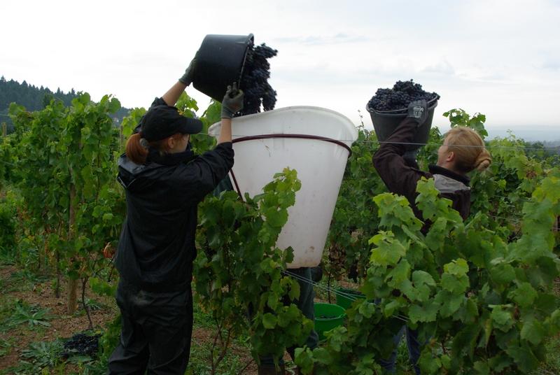 Des vignes relais, pour faciliter l'installation de jeunes viticulteurs